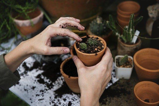 Aké rastliny pestujete najradšej?