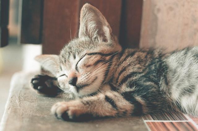 spokojne spiace mačiatko