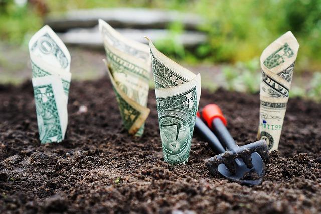 Doláre v záhradke.jpg